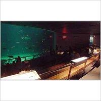 Aesthetic Design Fresh Water Aquariums