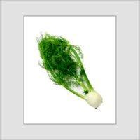 Rich In Taste Green Fennel