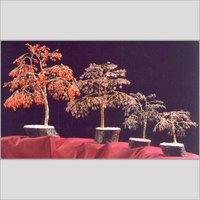 Artificial Tree