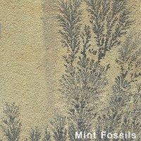 MINT FOSSILS SAND STONE