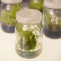 Herbal Soaps Fragrances