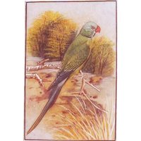 Animals Paintings Of Green Parrot
