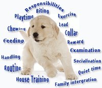 Dogs And Puppy Training Books