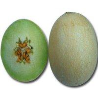 Muskmelon Jahanvi Seed