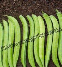 Cluster Bean Seeds