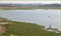 Lake Bioremediation Integrated Biotech Solution