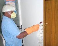Powder Pest Beetless Treatment Service
