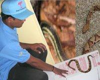 Snake Prevention Treatment Service