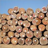 Teak Veneer Logs