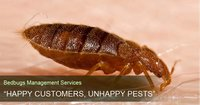 Bedbugs Management Service