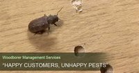 Woodborer Management Service