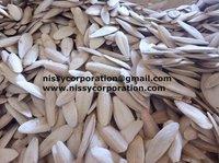 Cuttle Fish Bone