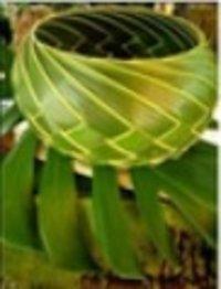 Palmyra Leaf Basket (Plb-03)