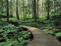 Runwal Forests