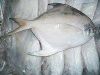 Dilver Pomfret Fish