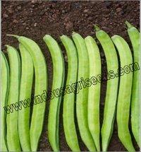 Bean Hybrid Seed