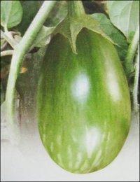 TAKII Seeds India Pvt Ltd - Black Seeds Distributor from Bengaluru