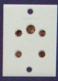 6 Amp. 5 Pin Socket
