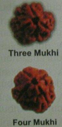 Three And Four Mukhi Rudraksha