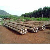 Eucalyptus Wood Timbers
