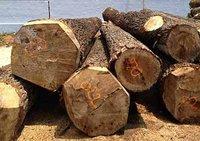 Poplar Wood Logs