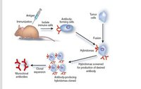 Mouse Anti-Human ADIPOQ Monoclonal Antibody