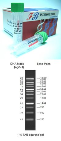 Assorted Dna Ladders