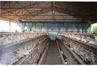 Layer Cages With Hopper Feeding System