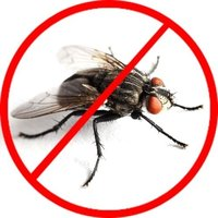 House Fly Pest Control Service