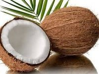 Buyers of Coconut, Coconut Buy Requirements, Importers