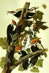 John James Birds Painting