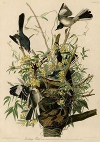 Mocking Bird Painting