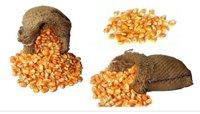 Maize Whole