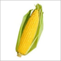 Cost-effective Yellow Color Maize