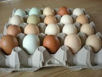 Organic Fresh Chicken Table Eggs And Fertilized Hatching Eggs