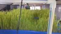 Hydroponic Green Fodder Machines (Hgf)