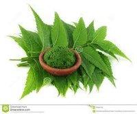 Organics Purify Fresh Neem Leaves