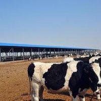 PrefabricatedSteelStructureDairy FarmSheds