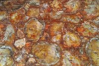 Yellow Petrified Wood Slabs