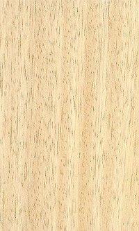 Golden Maple Natural Veneers