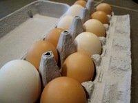 Quality Organic Fresh Chicken Table Eggs