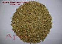 Hordeum Vulgare Seed