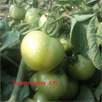 High Quality Tomato Seeds