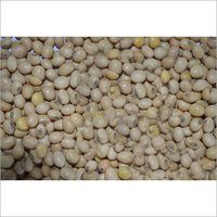 Hybrid Soya Bean Seeds