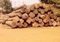 Premium Sal Wood Log