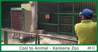 Kapsun Air Coolers For Zoo Animals