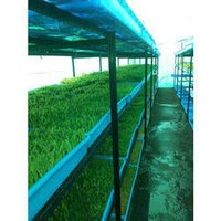 Green Fodder Hydroponics Machines