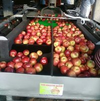 Apple Grading Machinery