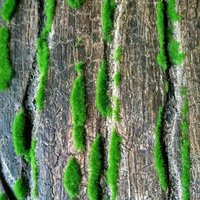 Artificial Tree Bark For Home Decoration