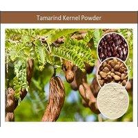 Pure Tamarind Kernel Powder